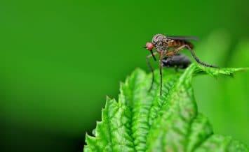 Mosquito Costa Rica