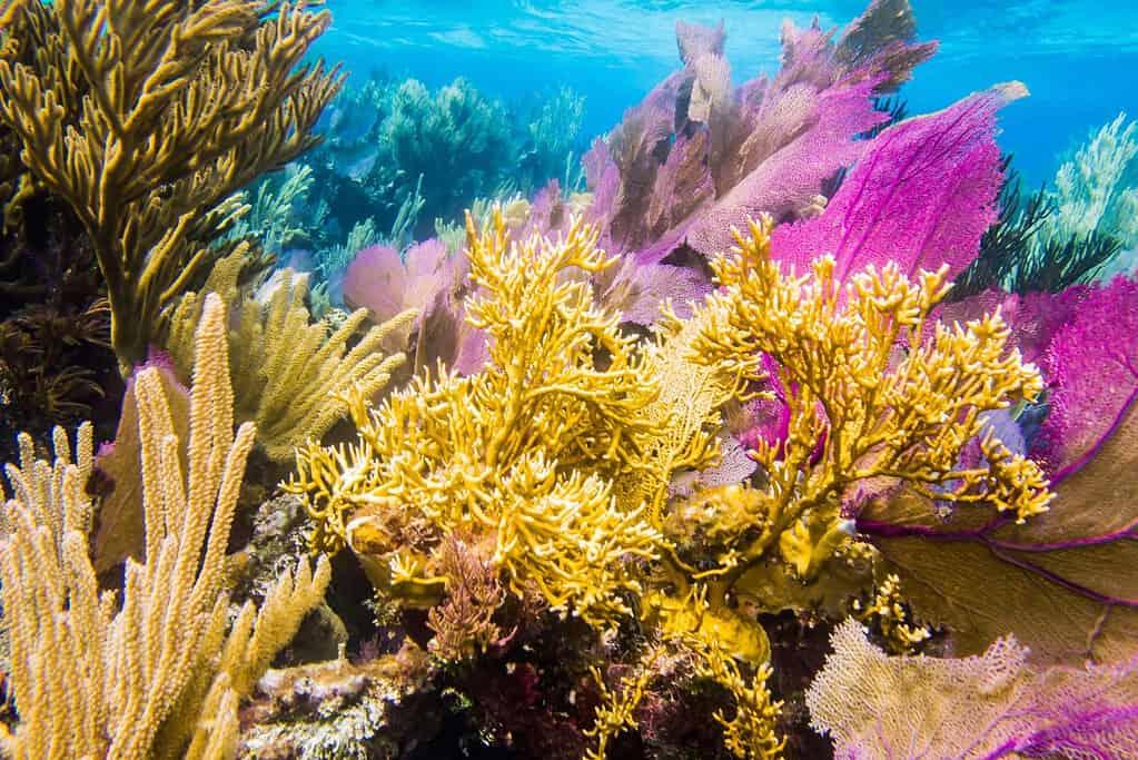 Reef in Couzmel